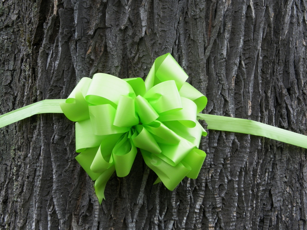 S.L.A.M. decks out Massachusetts in lime green ribbons! http://www.s-l-a-m.org/articles.html