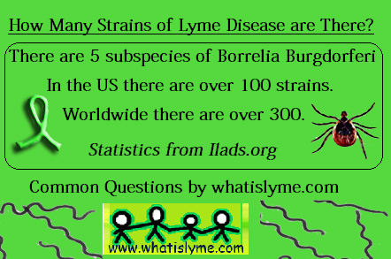 According To Ilads International Lyme And Associated Diseases Society