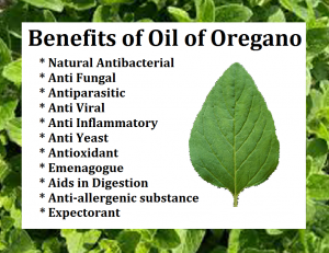 oil of oregano benefits