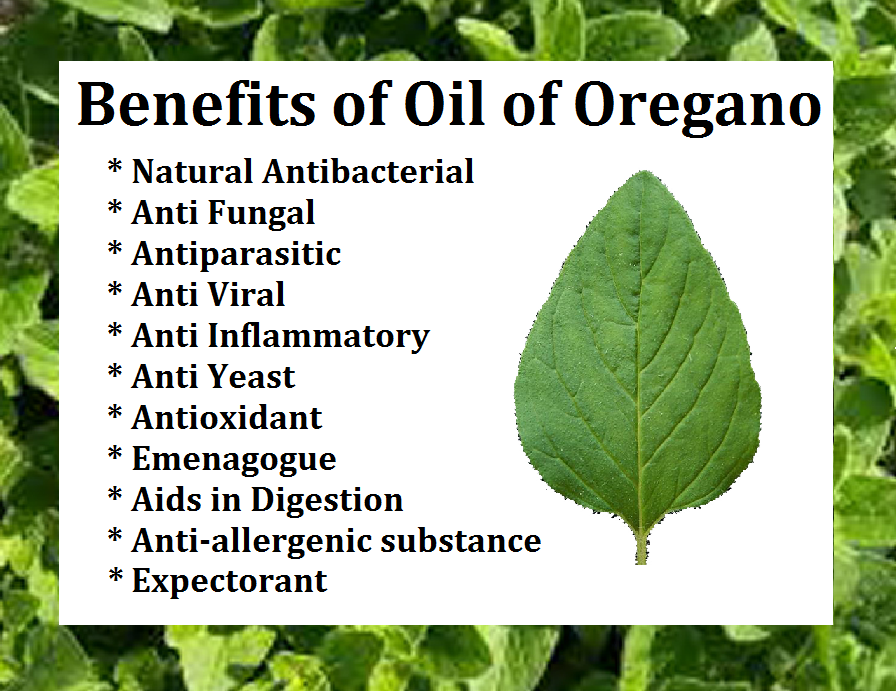 oil of oregano benefits